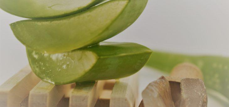 Aloe vera, ode à une plante extra-ordinaire!